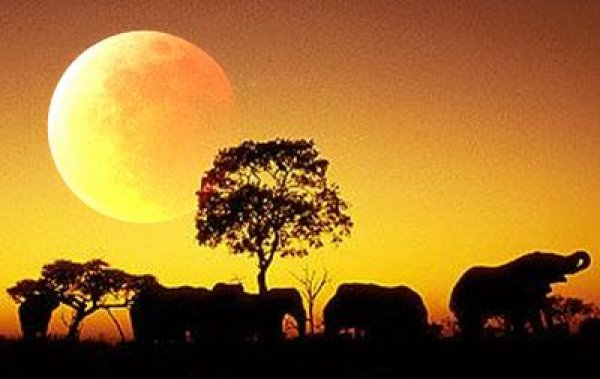 画像1: モカブレンド「アフリカ・ムーン」  (1)
